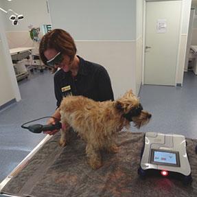 parkinson-vet-laser