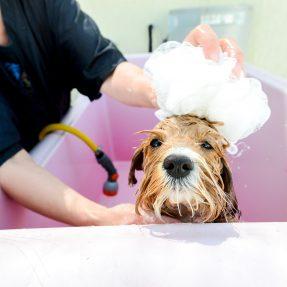 Grooming hydrobath