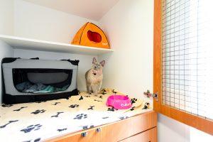 Cat ward